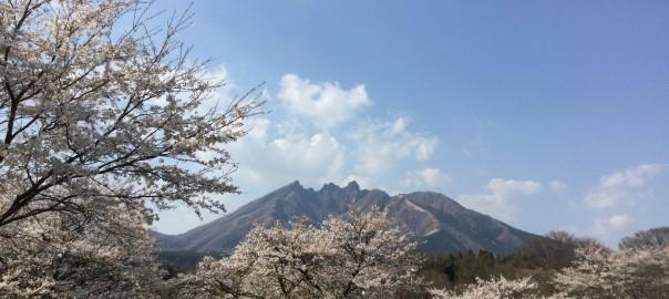 休暇村園地の桜